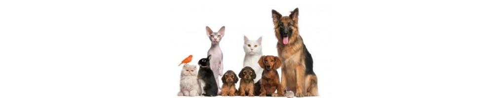 Prodotti monouso per veterinaria all'ingrosso disponibili online con consegna in tutta Italia.